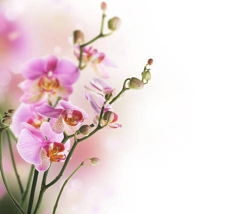 Орхидея, фото 2