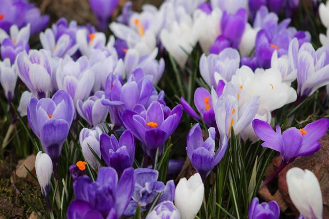 Весна, фото 2