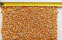 Кукуруза для попкорна ARGO 1 кг