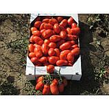 Насіння томату Сан Парадайс F1, 1000 насіння, фото 2