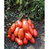Насіння томату Сан Парадайс F1, 1000 насіння, фото 3