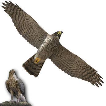 Визуальный отпугиватель птиц ЭкоБерд Тетеревятник