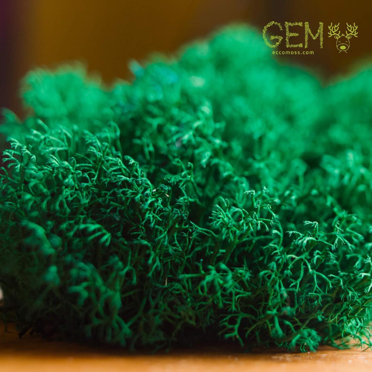 Стабілізований мох Green Ecco Лишайник ягель український смарагдовий 1 кг