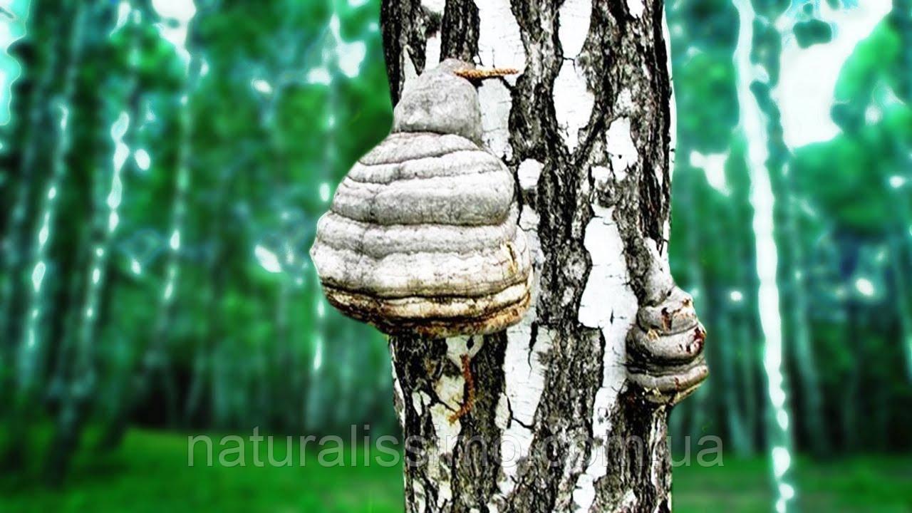 Гидролат гриба чаги, 1000 мл