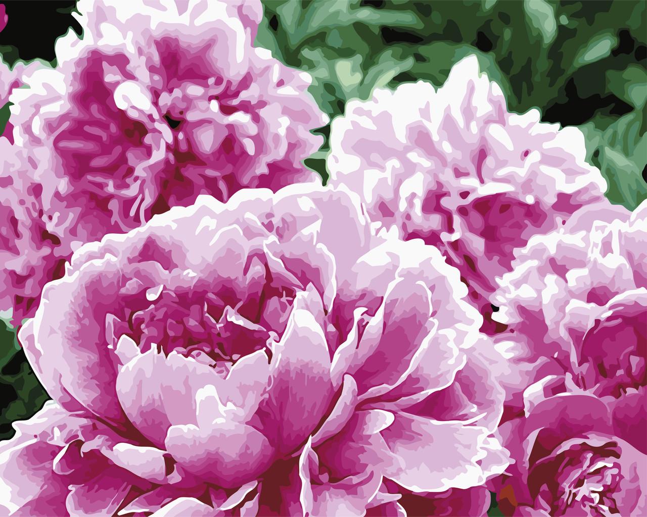 Картина по номерам Цвітіння піонів, 40x50 см., Art Story