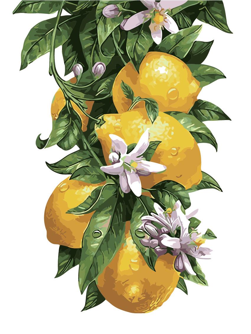 Картина по номерам Лимонное дерево, 30x40 см., Art Story