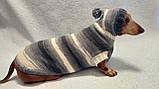 Одежда для собаки свитер с капюшоном,худи для собаки, фото 4