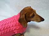 Розовый свитер для таксы или маленькой собаки, фото 4