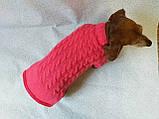 Розовый свитер для таксы или маленькой собаки, фото 7