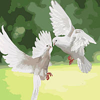 Акриловая картина по номерам на холсте птицы голуби 40х40, 2 уровень сложности