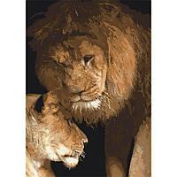 Акриловая картина по номерам на холсте лев и львица 40х50, 3 уровень сложности