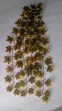 Свисающая,кустовая зелень-клен осенний ( 98 см), фото 3