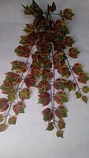 Свисающая,кустовая зелень-виноград осенний ( 98 см ), фото 3