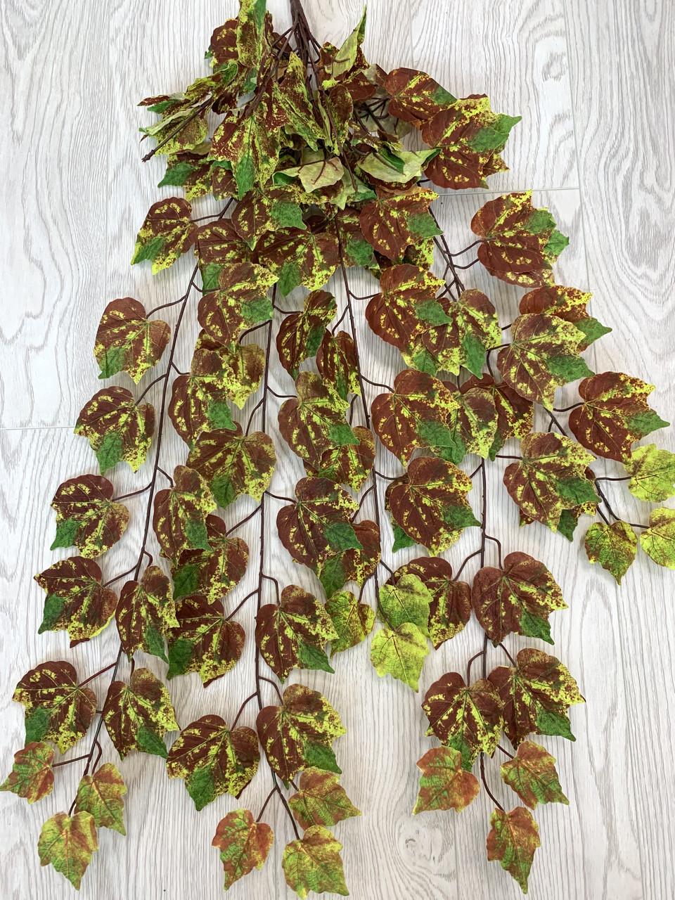 Свисающая,кустовая зелень-виноград осенний ( 98 см )