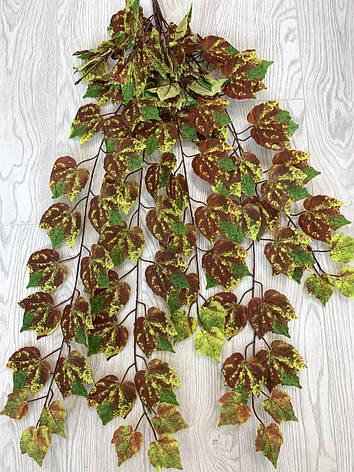 Свисающая,кустовая зелень-виноград осенний ( 98 см ), фото 2