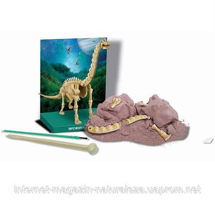 Набір для творчості 4M Скелет брахиозавра (00-03237), фото 2