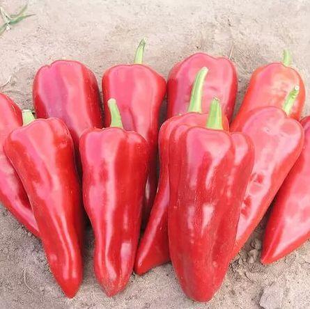 Семена перца сладкого Самандер F1 (1000 сем.) Nunhems