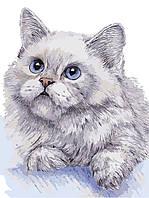"AS 0311 ""Белый кот""  Картина по номерам на холсте Art Story без коробки 40x30см"