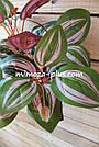 Искусственные растения - Калатея куст, 35 см, фото 5