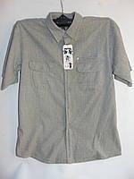 "Мужская рубашка коттон (52-60) ""Barselona"" LZ-1418"