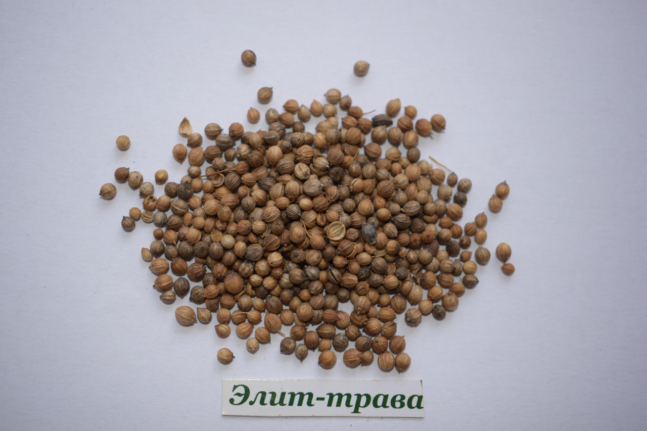Кориандр (кинза) семена  50 грамм