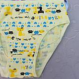 Трусики  для девочек, размер M.  Детские трусики, трусы для девочек, фото 2