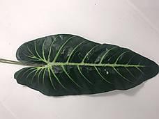 Искусственный декоративный лист.Лист для декора., фото 2