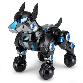 Собака на р/у  черная