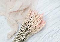 Сухоцвіт колосок рожевий 1 шт