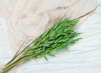 Сухоцвет овес зеленый, фото 1