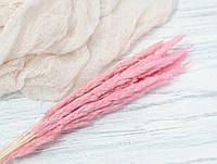 Сухоцвіт лисячий хвіст. рожевий