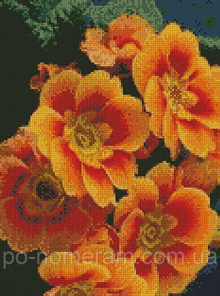Алмазная вышивка Идейка Примула оранжевая (AM6103) 30 х 40 см
