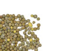 Osmocote Exact Protect  - эффективное удобрение для пересадки осенью!