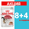 Корм Роял Канин Инстинктив Royal Canin Instinctive in gravy корм для кошек в соусе 85 г(8+4)