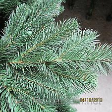 Ялинка лита Альпійська, фото 3