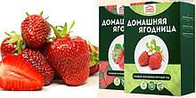 Чудо-ягодница Сказочный сбор – набор для выращивания клубники на подоконнике