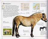 Коні. Харріс Мойра, фото 4