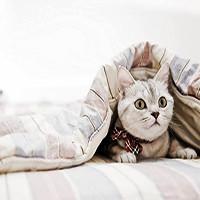 Одеяла летние оптом
