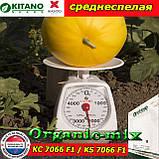 Семена, дыня КС 7066 F1 / KS 7066 F1 (среднеспелая), 100 семян ТМ Kitano Seeds (Нидерланды), фото 2