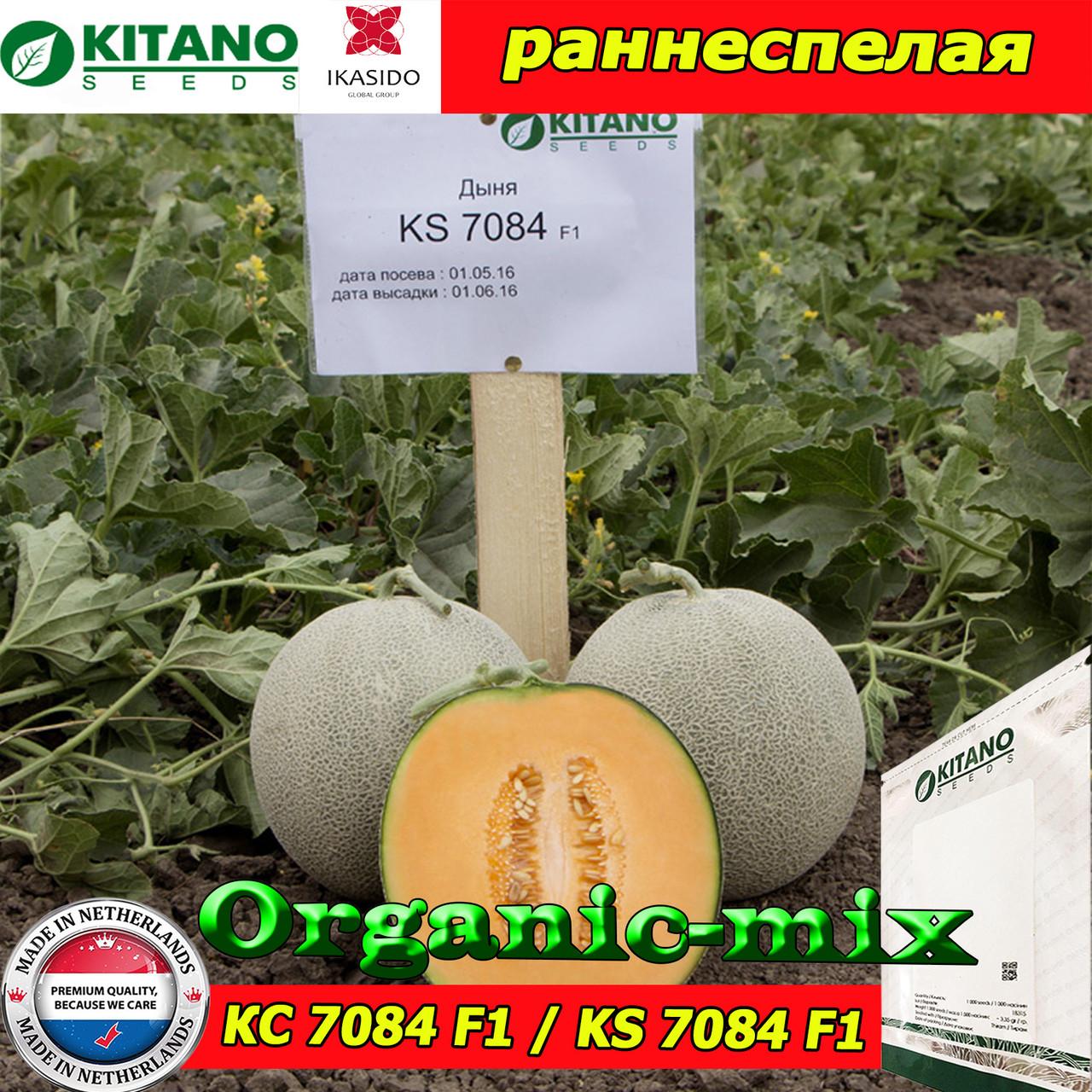Семена, дыня КС 7084 F1 / KS 7084 (раннеспелая), 1000 семян ТМ Kitano Seeds (Нидерланды)