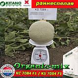 Семена, дыня КС 7084 F1 / KS 7084 (раннеспелая), 100 семян ТМ Kitano Seeds (Нидерланды), фото 2