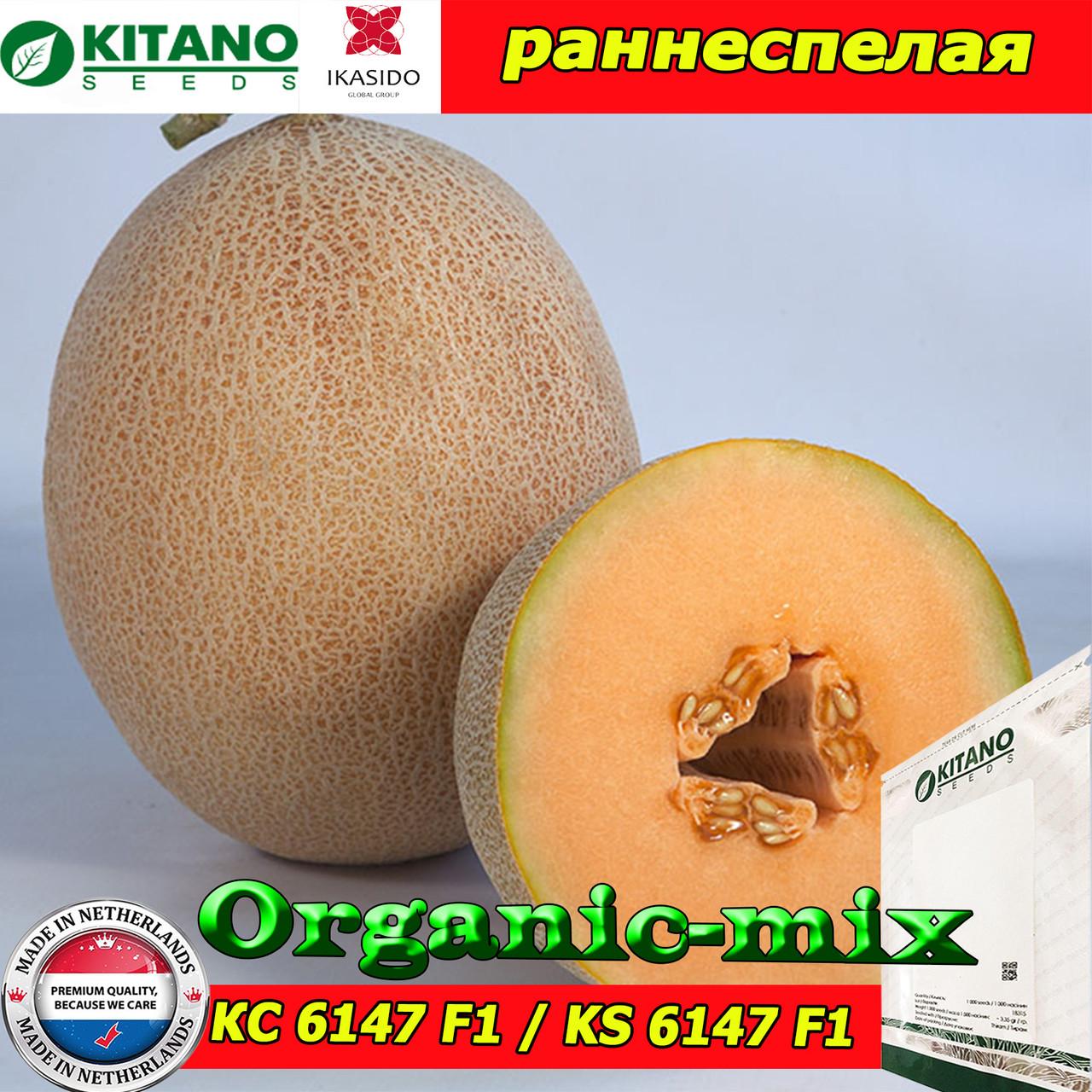 Семена, дыня КС 6147 F1 / KS 6147 F1 (ранеспелая), 100 семян ТМ Kitano Seeds (Нидерланды)