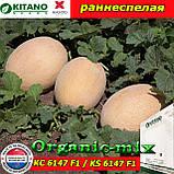 Семена, дыня КС 6147 F1 / KS 6147 F1 (ранеспелая), 100 семян ТМ Kitano Seeds (Нидерланды), фото 2