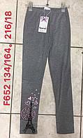 Лосины для девочек Taurus оптом, 134-164 pp. Артикул: F652