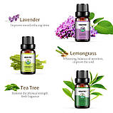 KBAYBO ефірні олії для ароматерапії, аромат лаванди, чайного дерева, розмарину, лимонника, апельсина, м'ята, фото 2