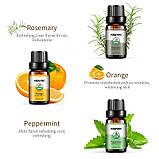 KBAYBO ефірні олії для ароматерапії, аромат лаванди, чайного дерева, розмарину, лимонника, апельсина, м'ята, фото 3