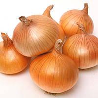 Семена лука-севка из Голландии