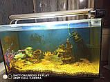 Автоматическая кормушка с дисплеем для рыб Resun AF-2005D, фото 2