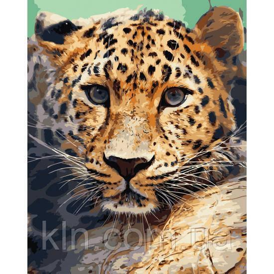 Картина по номерам ArtStory Взгляд леопарда 40 х 50 см (арт. AS0739)