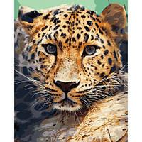 Картина по номерам ArtStory Взгляд леопарда 40 х 50 см (арт. AS0739), фото 1
